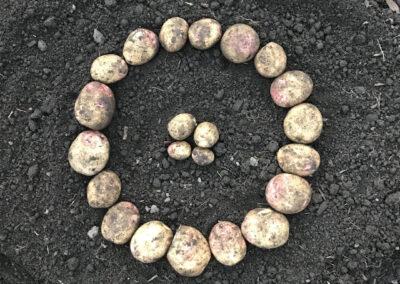Potato Ring